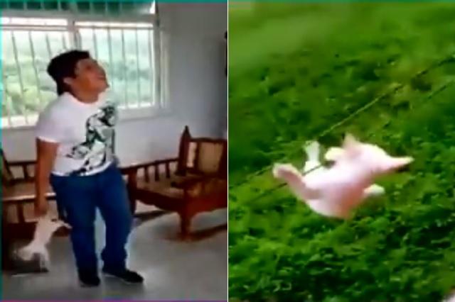 Jóvenes se graban maltratando a un gato en Tabasco