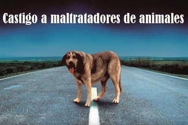 Mayoría de mexicanos piden cárcel para maltratadores de animales
