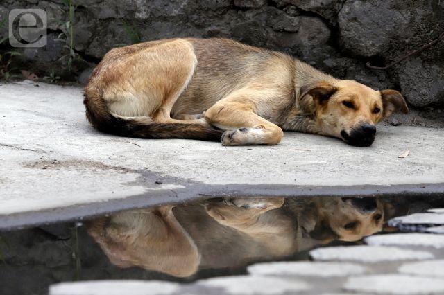 Bienestar Animal de Tehuacán descarta sacrificio de perros