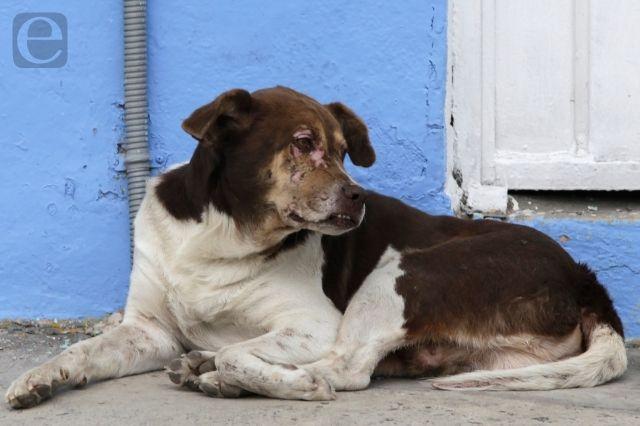 Hay al menos 11 denuncias por maltrato animal en Tehuacán