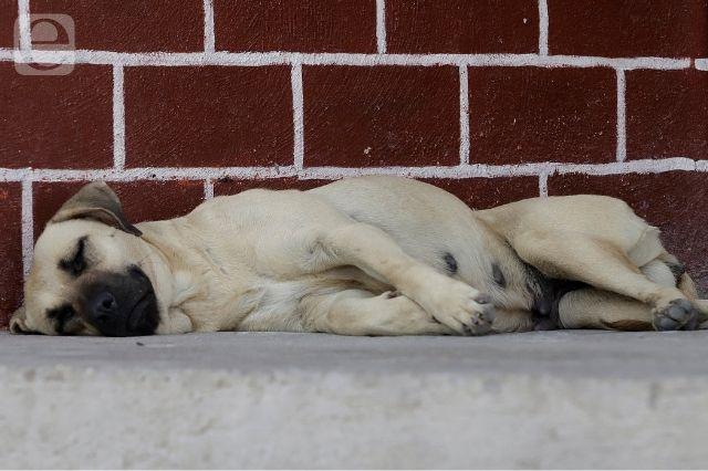 Hallan a perrita muerta, víctima de maltrato animal en Atlixco