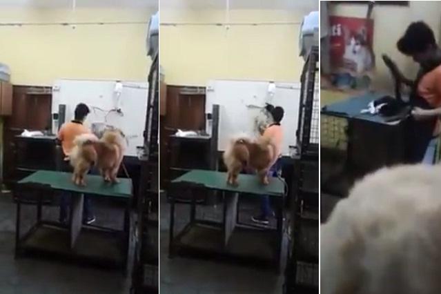 Exhiben en YouTube a trabajadores de veterinaria golpeando a animales