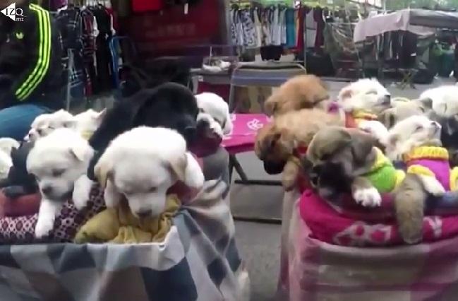 Venta inhumana de cachorros en China indigna y alarma a en redes