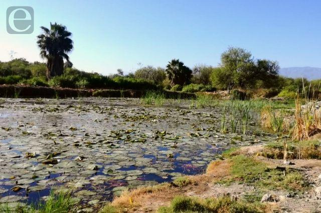 Por exceso de pozos la sequía del manantial La Ciénega