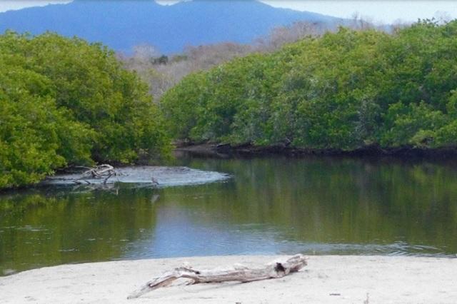 Cancela Semarnat concesión de manglar a empresa en Punta Mita