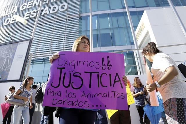 Por maltrato animal, 10 años de cárcel, aprueban en Puebla