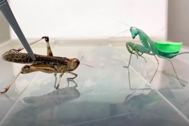 Foto YouTube InsecthausTV