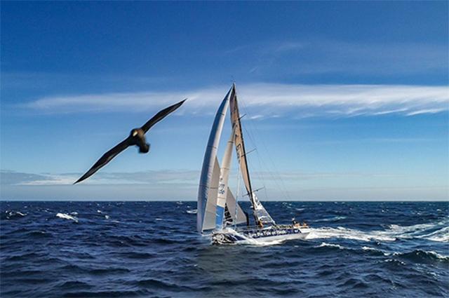 Los albatros, símbolo inequívoco de paz y tranquilidad en el mar