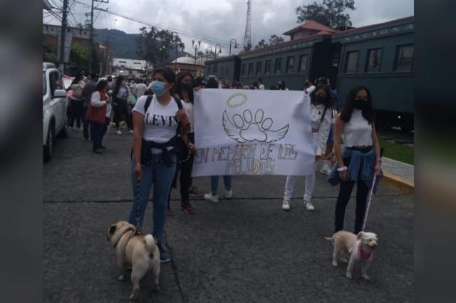 Marchan en Teziutlán por envenenamiento de 10 perros callejeros
