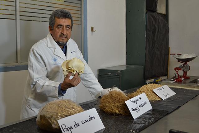 Impulsa la BUAP cultivo de hongo alimenticio en zonas marginadas