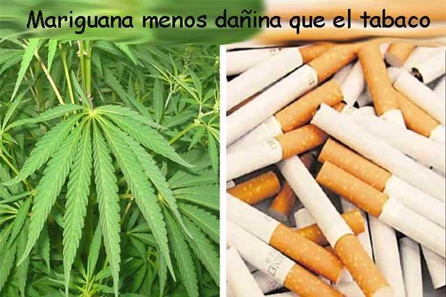 Según ciudadanos, la marihuana es menos dañina que el tabaco