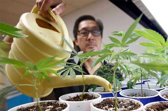 Anuncia Segob que foro sobre marihuana será el 26 de enero