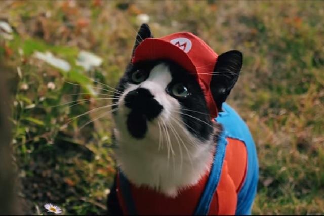 Recrean las aventuras de Mario Bros ¡con gatos!