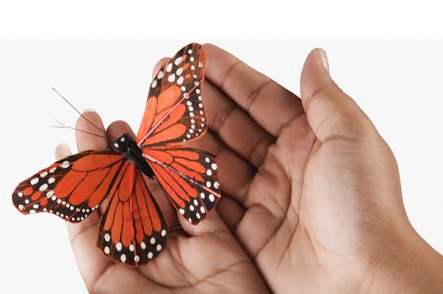 Daniel Madariaga Barrilado explica cómo el cambio climático está afectando la migración de la mariposa monarca de México