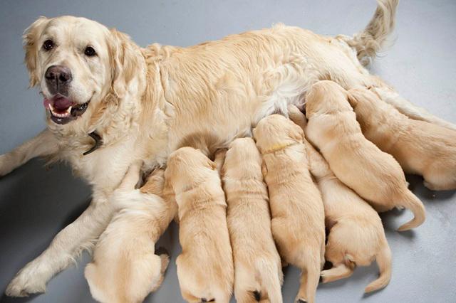 Esterilización temprana previene enfermedades en perros y gatos