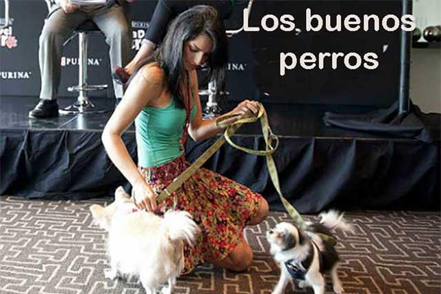 Tener un perro, más que poseer una mascota