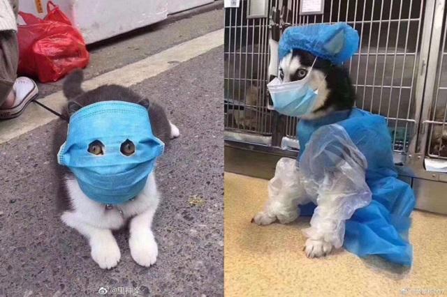 En China, así protegen a las mascotas para no contagiarlas de coronavirus