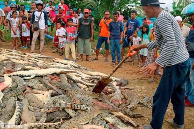 Matan a 292 cocodrilos para vengar la muerte de un vecino