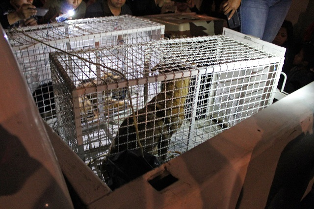 La mujer mata perros también tenía gatos y conejos refrigerados