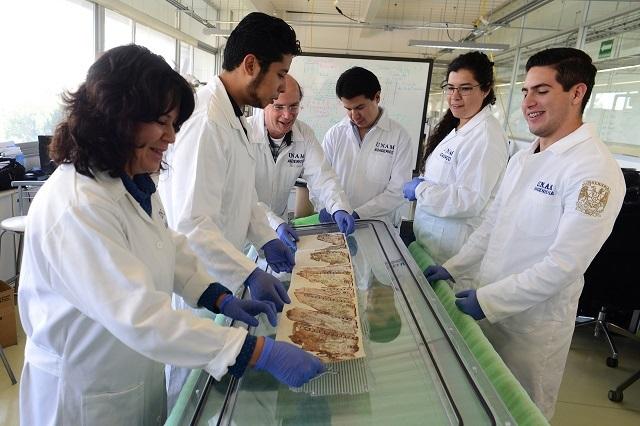 Expertos realizan capsula para preservar códice maya