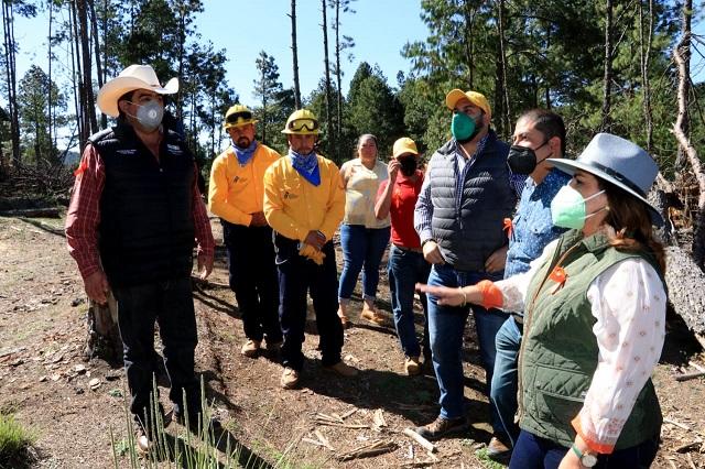 Promoverá gobierno recuperación forestal en Ahuazotepec: Manrique