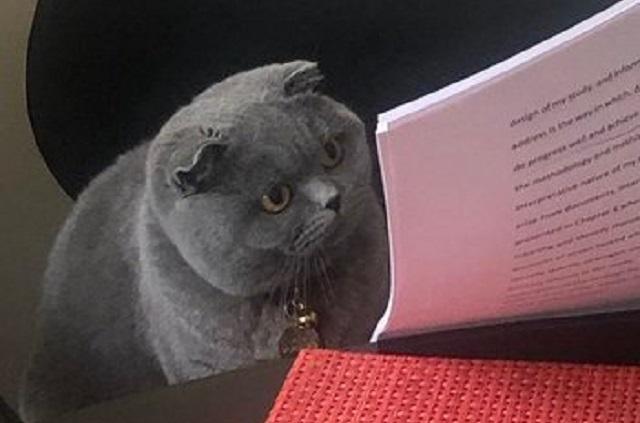 Este es el origen del meme del gato regañado por su examen