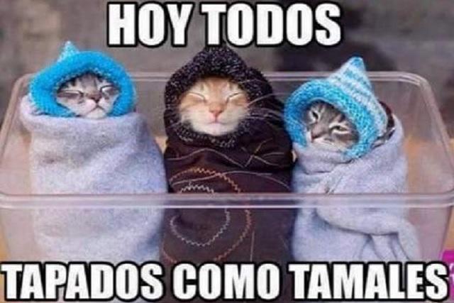 El frío llegó a todo México ¡y también los memes!