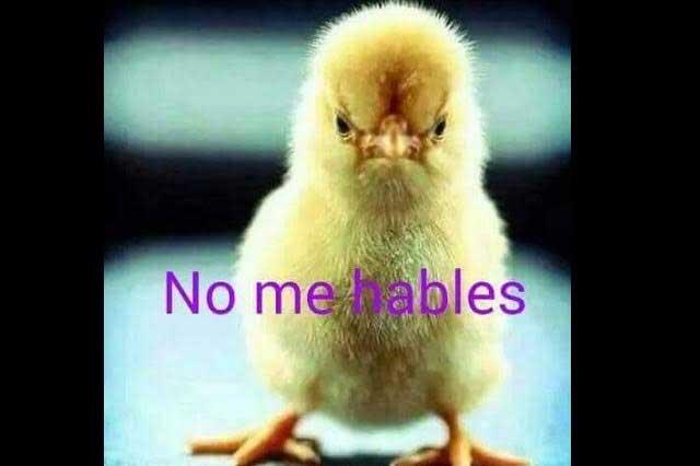 Memes De La Caida Del America Ante Pumas E Consulta Com 2019