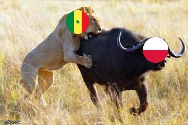 Senegal se devora con memes a Polonia tras ganarle 2-1