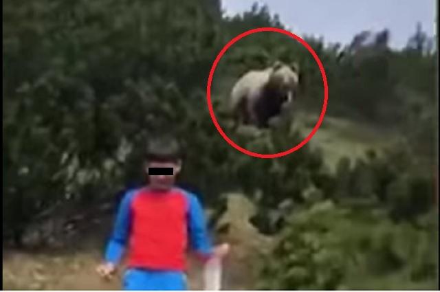 Oso sorprende a niño que paseaba en valle de Italia