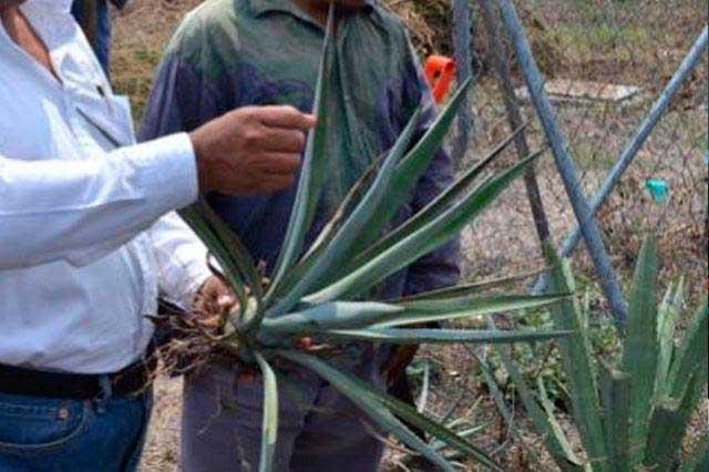 Promoverá Canirac consumo de mezcal poblano de origen