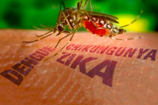 Brasil vincula al virus del Zika con la microcefalia