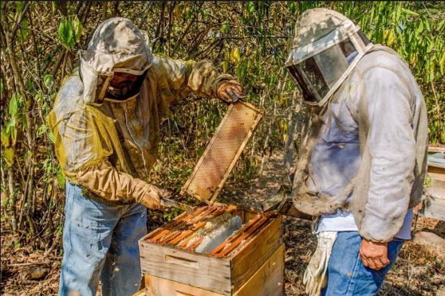 Exportación de miel mexicana aumentó 11 % en primer semestre 2018