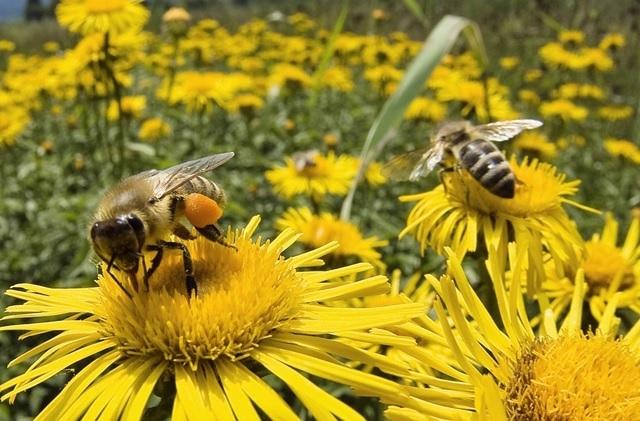 En 4 años se han perdido 1,600 millones de abejas en México
