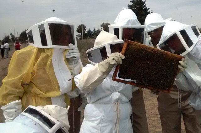 Puebla es octavo exportador nacional de miel: Sagarpa