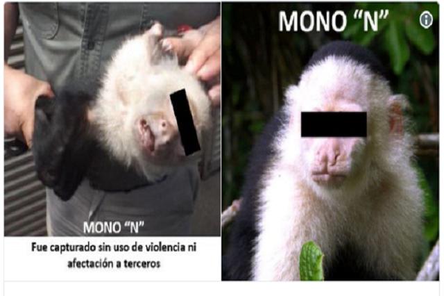 Los mejores memes de la captura del mono Capuchino