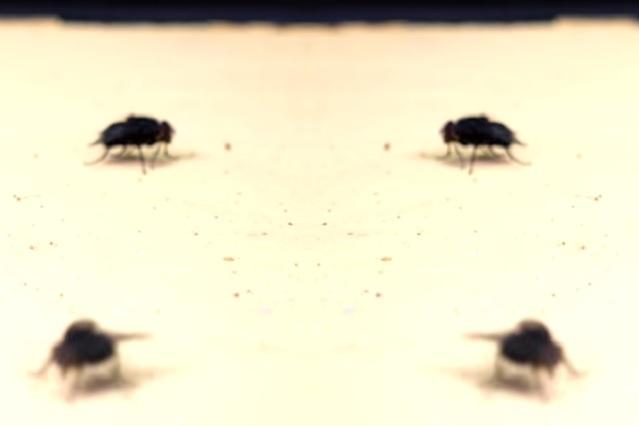 4 formas de eliminar a las moscas de casa, presumen que son muy eficaces