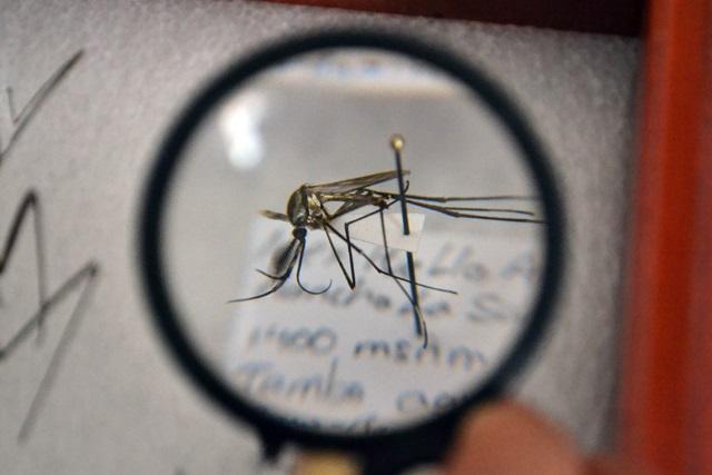 Libra Puebla enfermedad por virus de zika en 2019