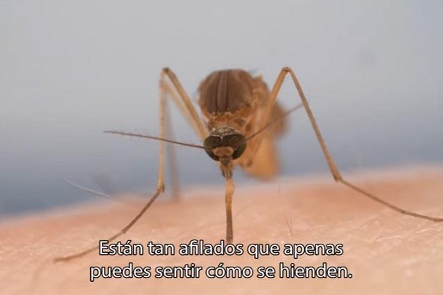 ¿Por qué pican los mosquitos más a unas personas que a otras?