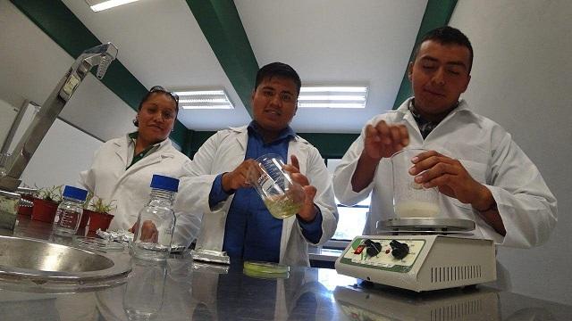 Estudiantes UTTECAM crean trampa contra insectos plaga en cultivos