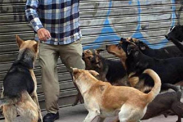 Muere hombre tras ataque de perros, en el Edomex