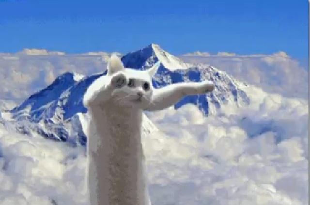 Muere Nobiko, el gato largo que inspiró muchos memes