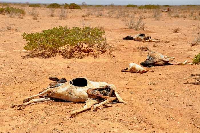 Nasa: México sufrirá mega escasez de agua en 2060