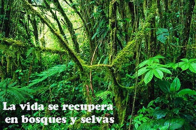Regeneración natural de selvas y bosques mitiga cambio climático
