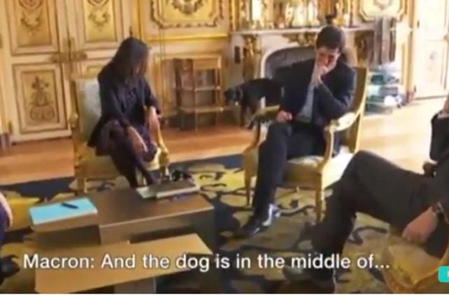 Nemo, la mascota presidente francés lo hace vivir bochornoso momento