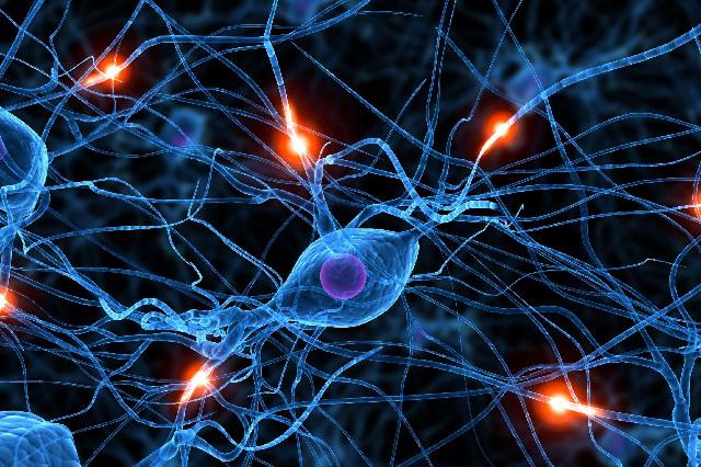 Decodifican cómo funcionan las neuronas cuando se toman decisiones