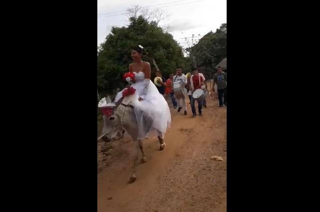 VIDEO: Novia llega a su boda montada en burro y YouTube la ama