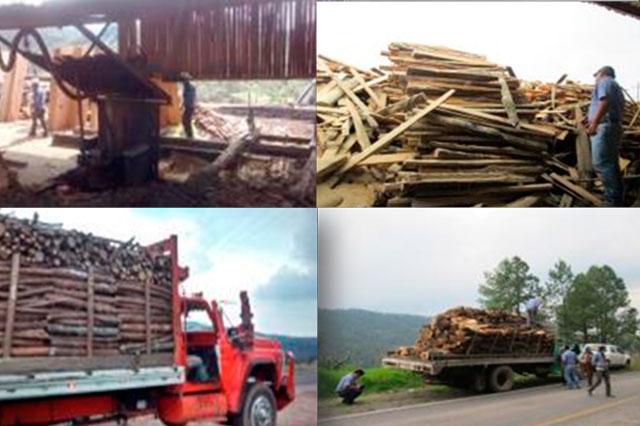 Asegura Profepa madera y cierra 2  bodegas en Puebla