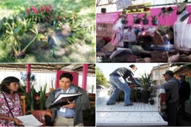 Asegura Profepa orquídeas silvestres comercializadas en Huauchinango