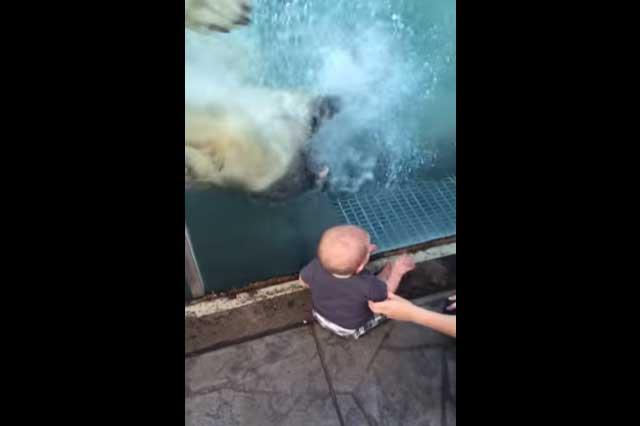 Se viraliza video de oso que intenta devorar a bebé que visita zoológico